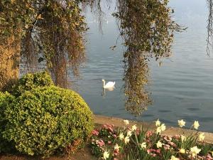 Tatiana Alciati Wedding & Events Locations Svizzera Lago Lugano